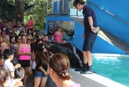 Semana de bonanza de asistencia  en Acuario Mazatlán