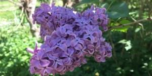 national_public_garden_day_tudor_place