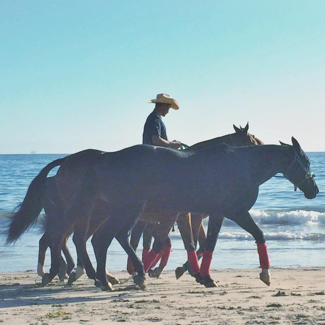 maximum beach cowboy