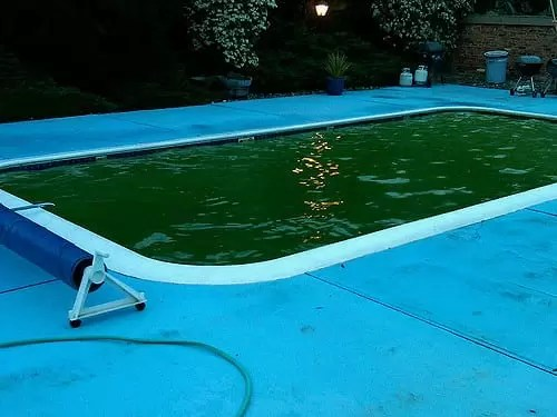 how to clean green algae from pool