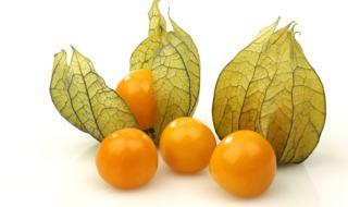 manfaat buah ciplukan
