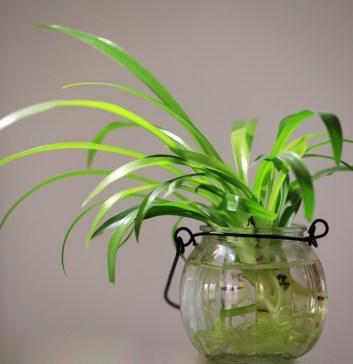 gree plants