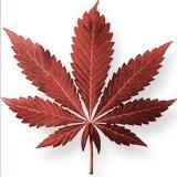 Medical Marijuana for HIV/AIDS