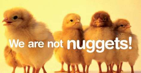 notnuggets1