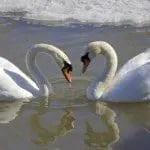 descargar mensajes para tu pareja por el dia de San Valentín,mensajes lindos para tu pareja por el dia de San Valentín,descargar palabras bonitas para tu pareja por el dia de San Valentín,descargar mensajes para tu pareja por el dia de San Valentín