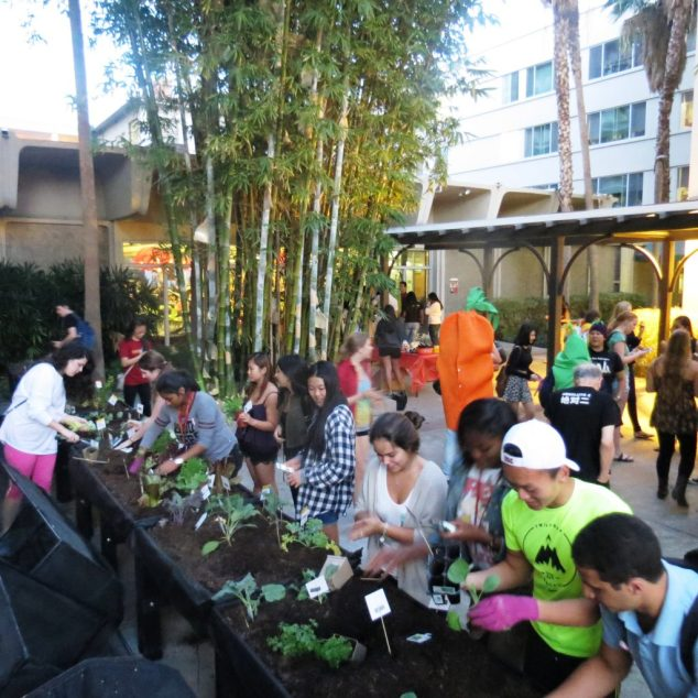USC campus planting frenzy