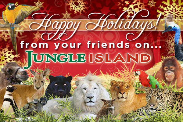 Image result for holiday jungle island