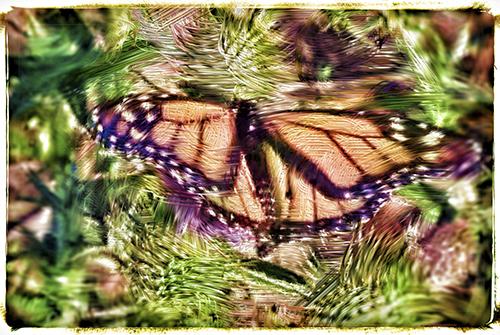 Change For The Better © lynette sheppard