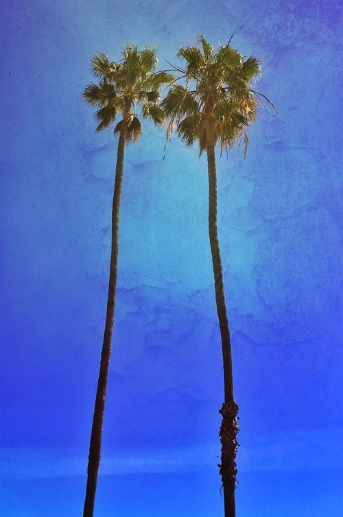 Coupled Palms © lynette sheppard
