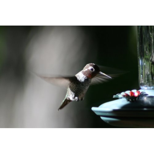 Medium Crop Of When To Stop Feeding Hummingbirds