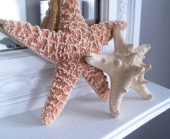 Starfish from San Francisco.
