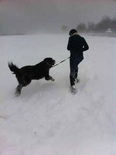 Happy snow dog.