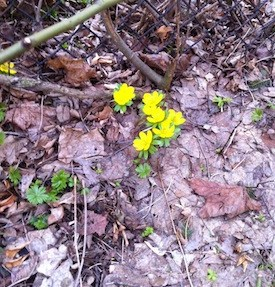 First flowers of the season.