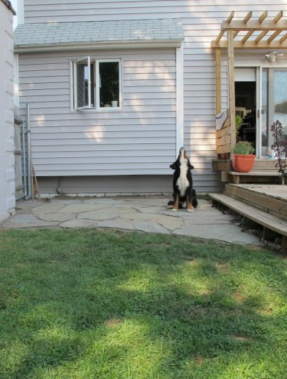 Finished flagstone patio, and a howling dog.