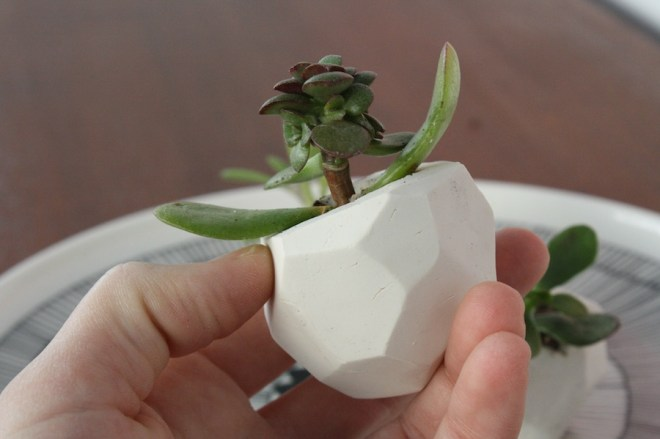 DIY clay pots as wedding favors.
