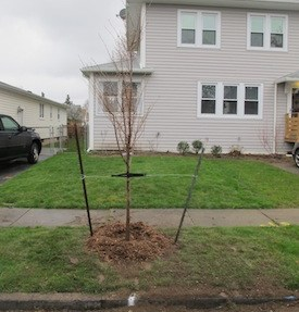 Transplant new trees in the springtime.