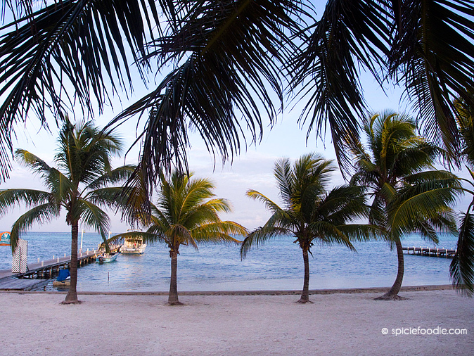 Palm Trees on San Pedro | #AmbegrisCaye #Belize #travel