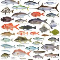 different fish names and pictures - Ocean Fish Pictures and Names