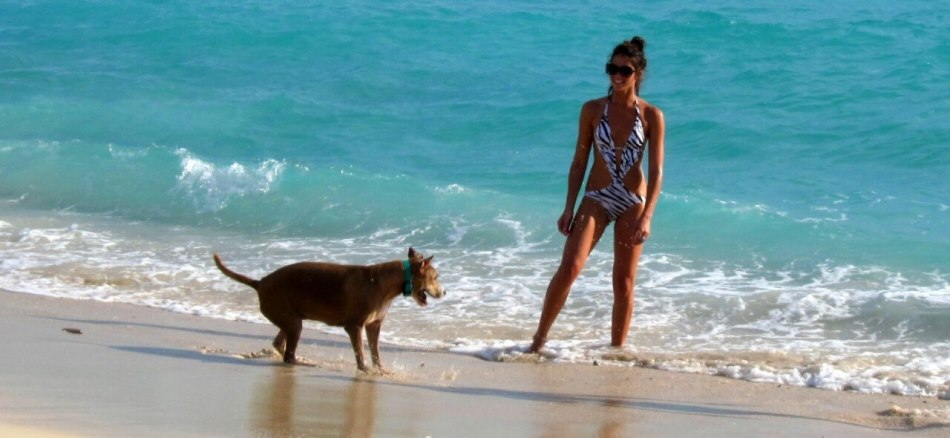 Dog Friendly Parks In Panama City Fl