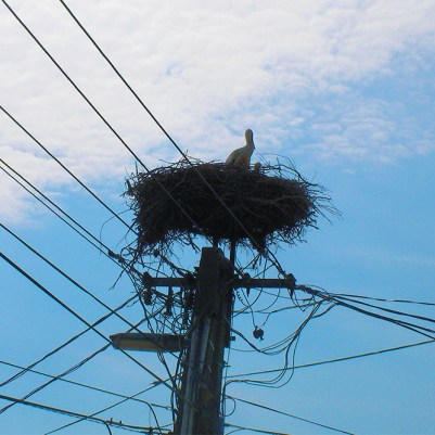 5 Mosca 2010_nido di cicogna