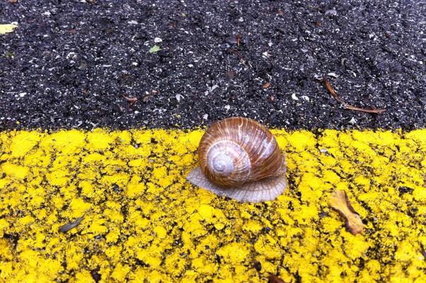 11 Italia 2013_lumaca per strada