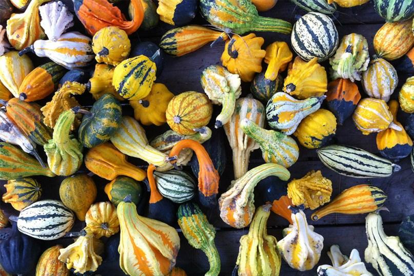 9 Italia 2013_zucche multicolore, Albarella, Chioggia