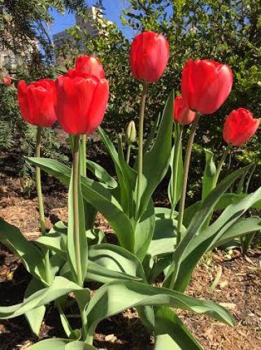 central park flowers2