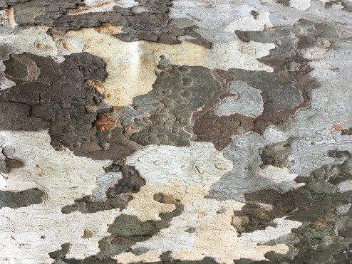 Tree bark in amazing patterns