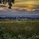 MiddleburgPhoto's photo