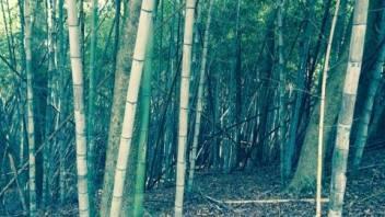 Day trip: Wilderness Park, Prattville
