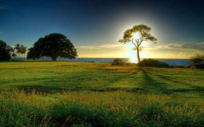 spirituality-tree-path-sun