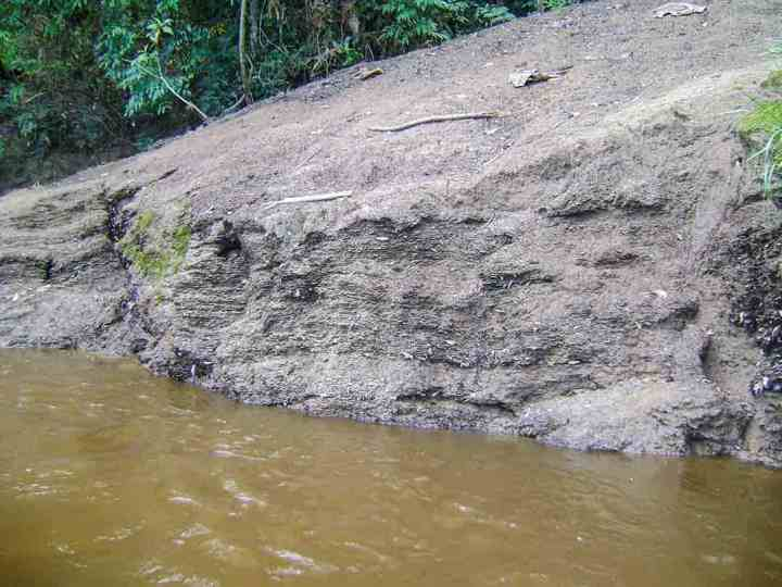 A leaf pack extending into the river on a point bar in Kalimantan.