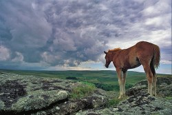 "Taming the ""Wild Horse"" of the Mind"
