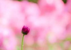 Mindfulness-Based Stress Reduction- Week Eight