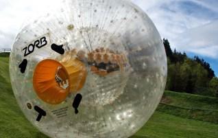 Rolling down a hill in New Zealand   Rotorua