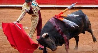 No a las Corridas de Toros: Harry Rodríguez líder del  PVEM Yucatán