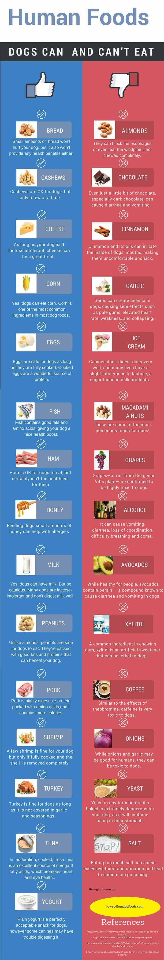 Exceptional Foods That Dogs Can Ir Food Can Dogs Have Avocado Fruit Cannot Eat Infographic Foods Toxic To Dogs Can Dogs Have Avocado bark post Can Dogs Have Avocado