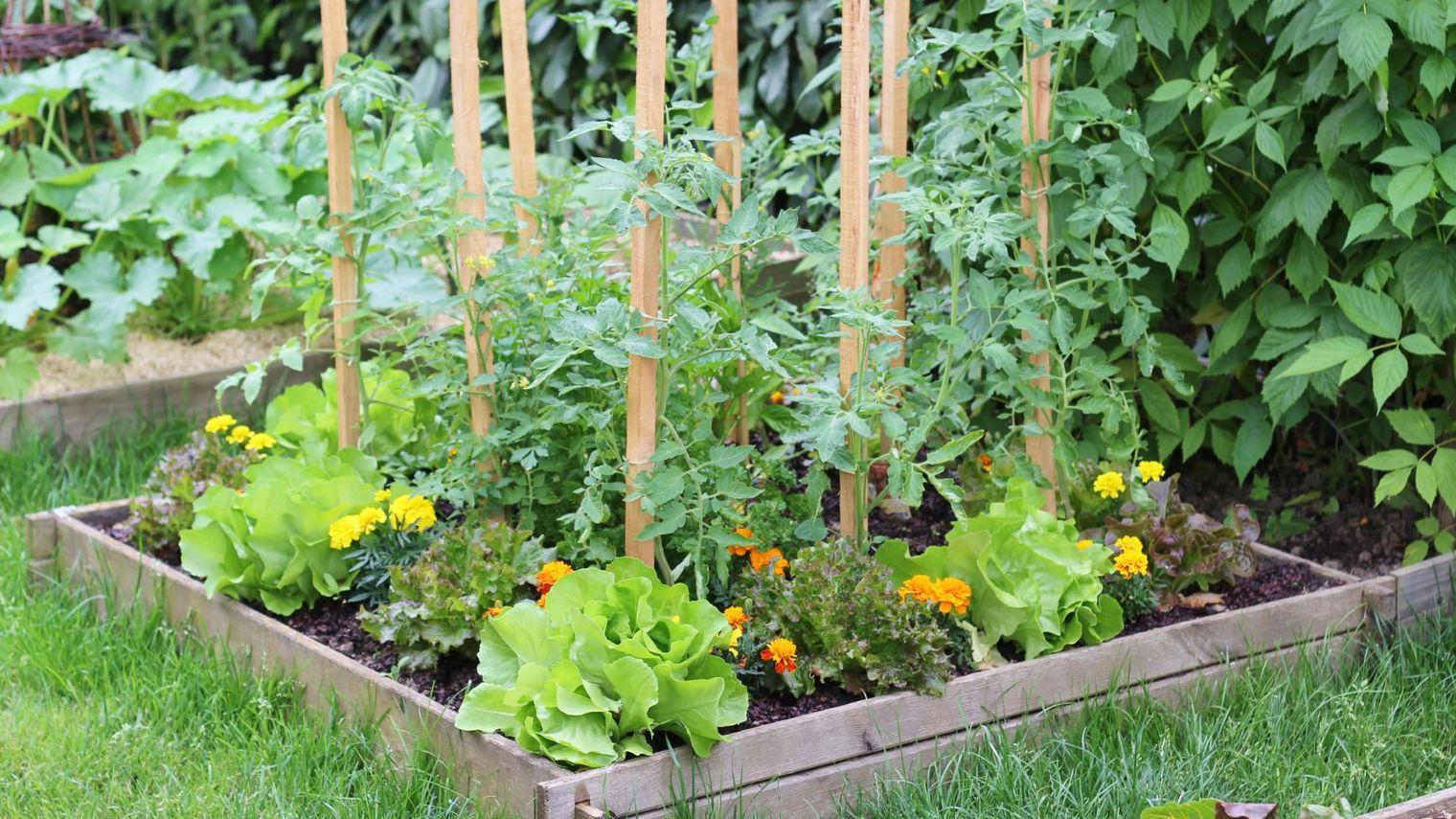 Améliorer son jardin à moindre coût