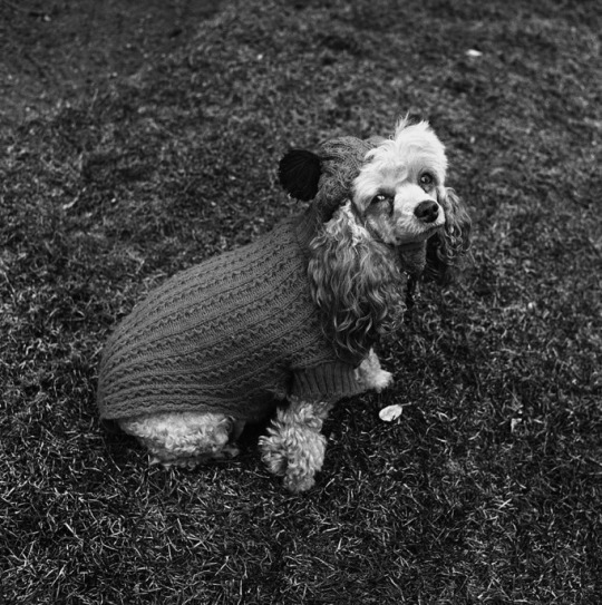 """Photo: """"Chammie in Wool,"""" Newton, MA, 1974, Vintage gelatin silver print. © Henry Horenstein, Courtesy of ClampArt, New York City."""