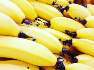 Bananas Going Extinct?