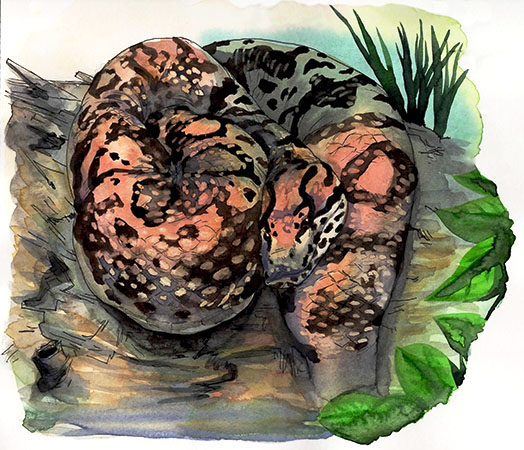 Philadelphia Zoo: Anaconda