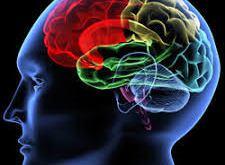 Neurofeedback Systems Market