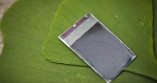mit-leaf