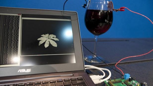 intel-wine-processor