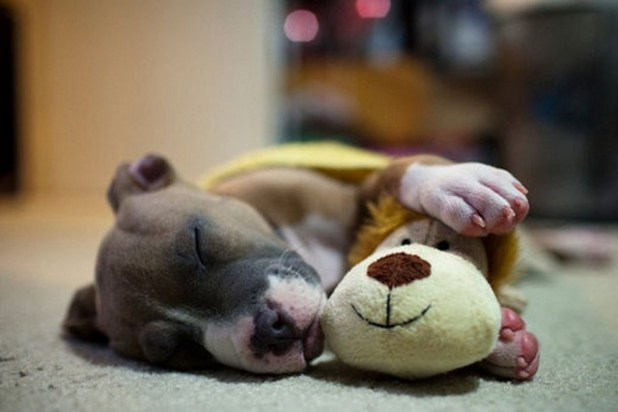 these-adorable-baby-animals-will-melt-your-heart-25-photos_520_17