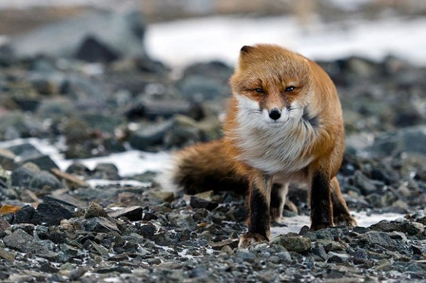 fox-photos-mobilemag
