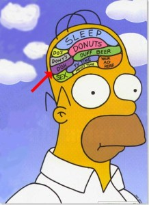 7 Myths About Your Brain