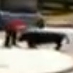 Video: Man Wrestles Escaped Bull to the Ground
