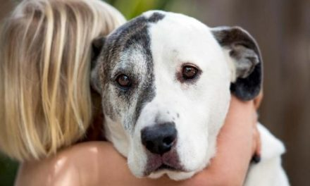 Your Dog Hates Your Hugs, So Quit It [Study]