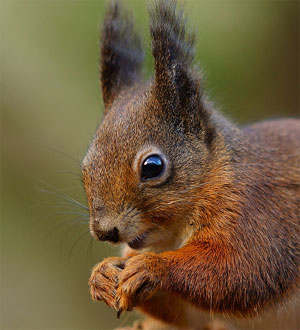 Scheming Squirrel